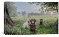 Dogs in the park, Canvas Print