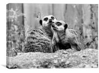 Meerkat Couple, Canvas Print