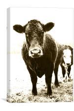 Cute Cow, Canvas Print