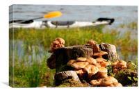 Viksjön, Sweden, kayak and mushrooms, Canvas Print