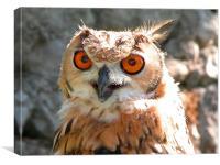 owl, peninsular, spain, Canvas Print