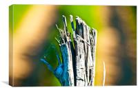 Right hand - old piece of wood, Canvas Print