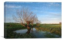 Willow Trees, Canvas Print