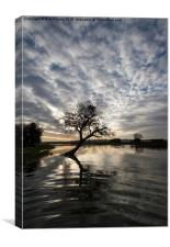 The River Parrett in Flood at sunrise, Canvas Print