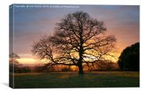 Tree and Winter Sunset, Canvas Print