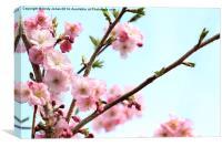 桜 (Sakura), Canvas Print