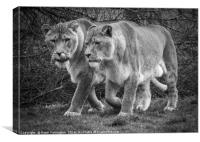 Big Cats Hunt, Canvas Print