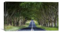 The Beech Avenue, Canvas Print