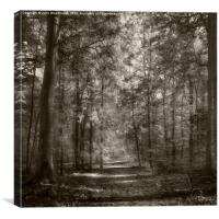 into the trees, Canvas Print