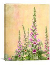 Digitalis Purpurea, Canvas Print