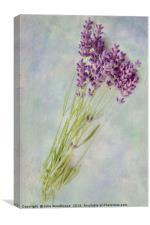Lavender flowers, Canvas Print