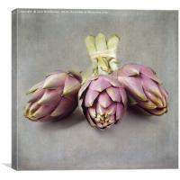 Globe artichoke, Canvas Print