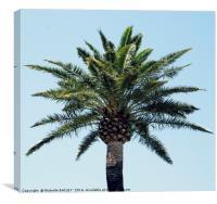 Palm Tree 2, Canvas Print