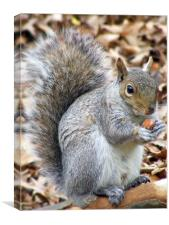 Squirrel feeding, Canvas Print