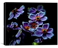 Flowers of the night, Canvas Print
