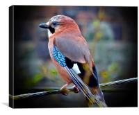 Jay bird, Canvas Print