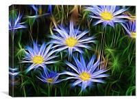 Star Flowers , Canvas Print