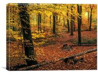 Beech Wood in Autumn, Canvas Print