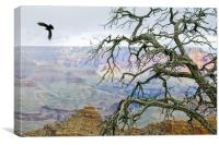 Raven in Grand Canyon, Canvas Print