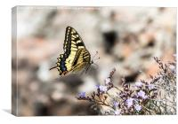 Swallowtail in Flight, Canvas Print