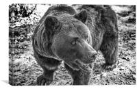 Brown Bear in Black and White, Canvas Print