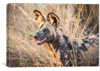 African Wild Dog, Canvas Print
