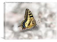 Beautiful Swallowtail, Canvas Print