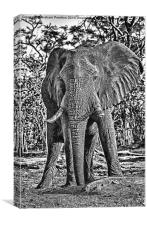 Bull African Elephant, Canvas Print