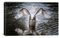 Angry Swan, Canvas Print