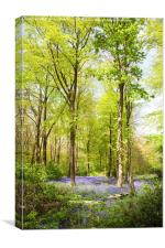 Bluebell Woods in Spring, Canvas Print