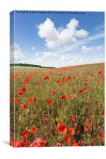 Norfolk Poppy Field, Canvas Print