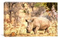 Powerful Rhino, Canvas Print