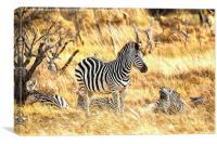 Zebras at Rest, Canvas Print
