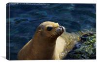 happy seal, Canvas Print