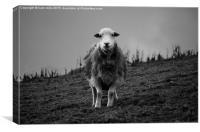 sheep, Canvas Print