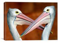 Dueling pelicans, Canvas Print