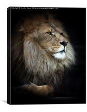Magnificent lion, Canvas Print