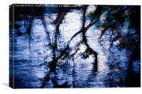 Mangrove reflection, Canvas Print