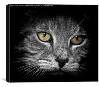 Cat, Canvas Print