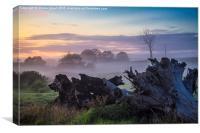 Mist over paddock, Canvas Print