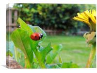 Ladybird, Canvas Print