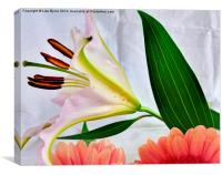 A Touch of Colour, Canvas Print