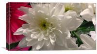 Lovely White Flower, Canvas Print