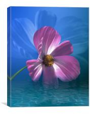 Cosmos Flower In Water, Canvas Print