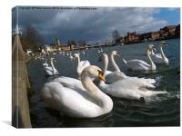 Swans on the Thames, Canvas Print