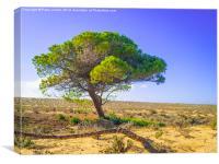 Lone Pine Tree, Canvas Print