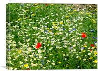 Yorkshire Wild flower meadow, Canvas Print