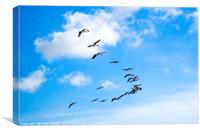 A skein of Canada Geese  flying over the RSPB  Sal, Canvas Print