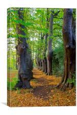 The Monk's Walk in the gardens of Guisborough Prio, Canvas Print