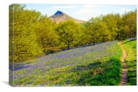 Bluebells in the Spring with Roseberry Topping Nor, Canvas Print